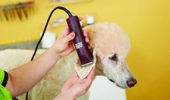oster dog clipper reviews
