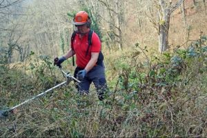 3 Best Brush Cutter For Brambles 2019