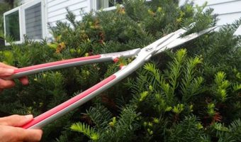 3 Best Garden Hedge Shears 2019