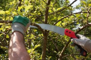3 Best Pruning Saw UK 2019