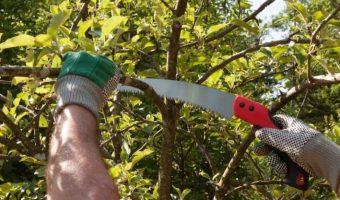 3 Best Pruning Saw UK 2019