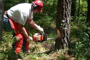 5 Best Chainsaw Trousers UK