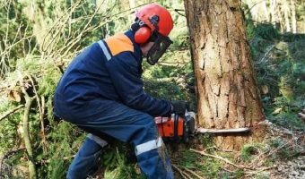 5 Best Electric Chainsaw UK