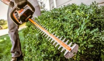 5 Best Electric Hedge Trimmer