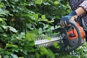 5 Best Lightweight Hedge Trimmers
