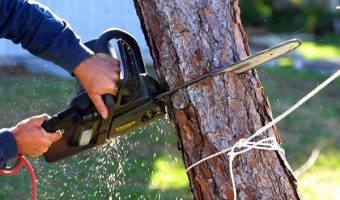 5 Best Petrol Chainsaws UK