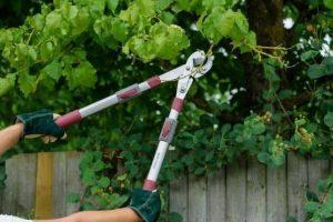 Top 5 Best Garden Loppers 2019